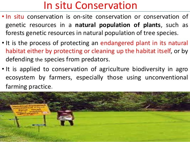 in situ and ex situ conservation methods Iucn species survival commission guidelines on the use of ex situ management for species conservation version 20 approved by the steering committee of the iucn species.