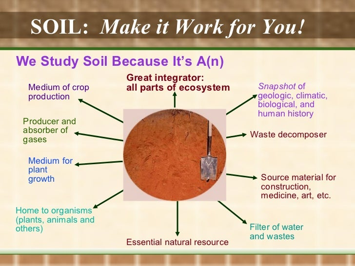 SOIL:   Make it Work for You!   We Study Soil Because It's A(n) Great integrator: all parts of ecosystem Producer and abso...