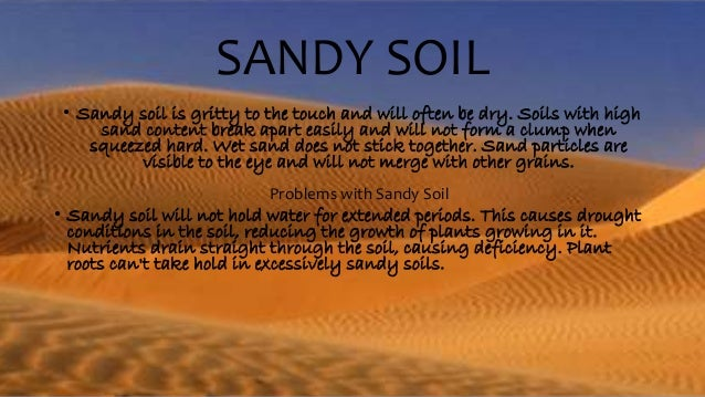sandy soil Species selection maintaining an attractive lawn on sandy soils depends largely  on the turfgrass species selected species that have improved drought.