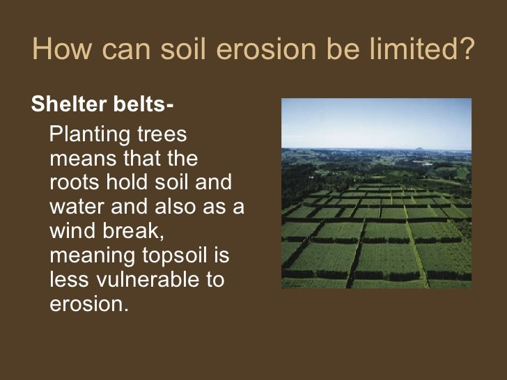 How can soil erosion be limited? <ul><li>Shelter belts- </li></ul><ul><li>Planting trees means that the roots hold soil an...
