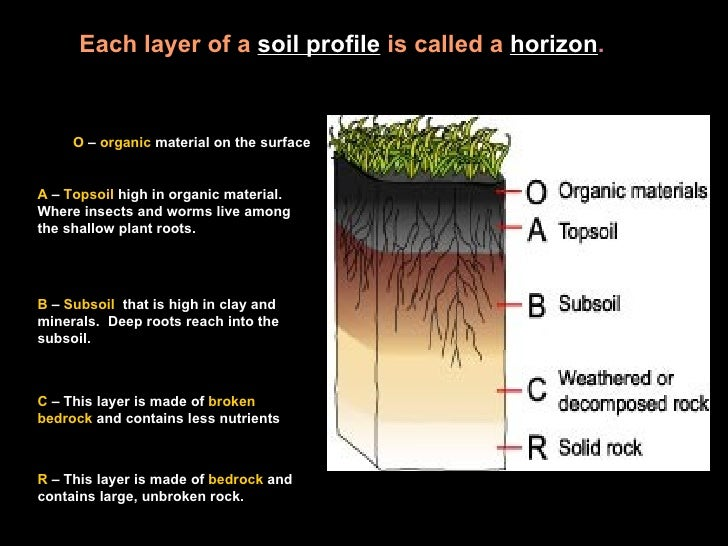 Soil powerpt for What does soil contain