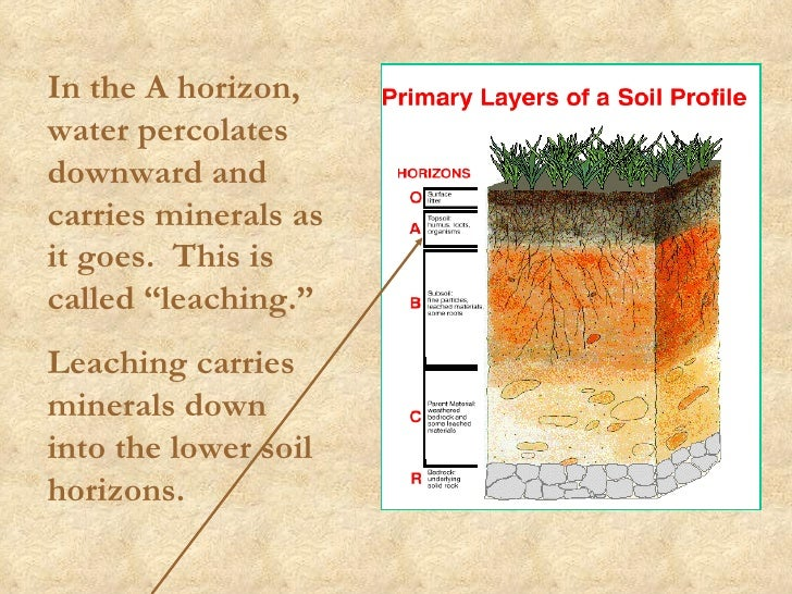 Level one for What is rich soil called