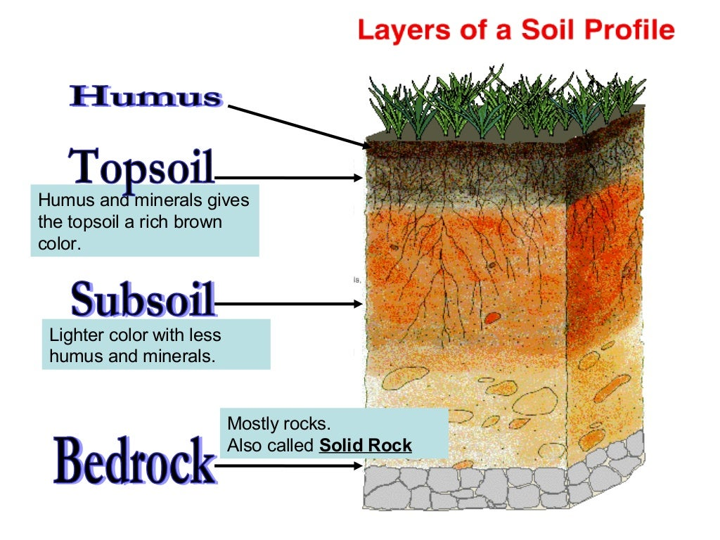Soil 1 for What are the different layers of soil