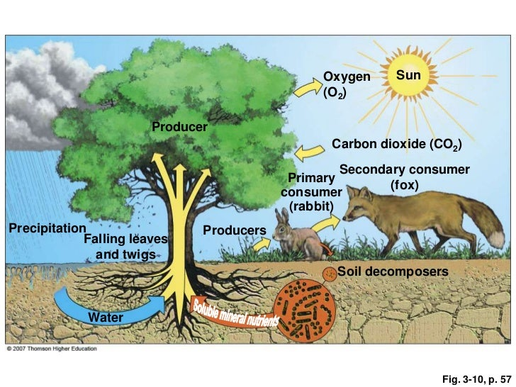carbon dioxide in organisms and ecosystems essay The cycle of oxygen through an ecosystem component of molecules such as carbon dioxide incorporated into an ecosystem's various components and organisms.