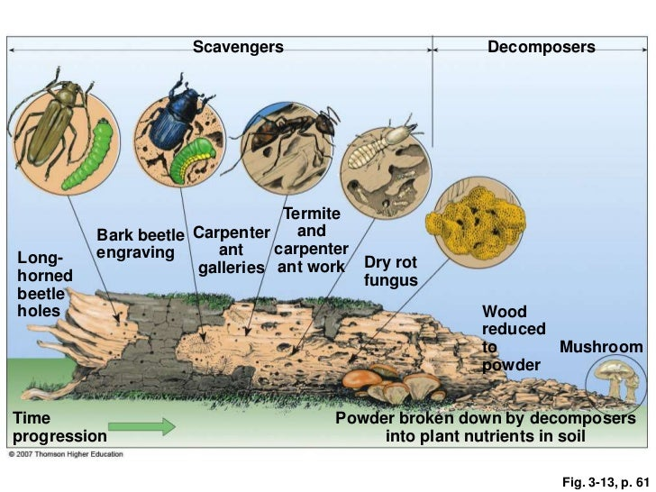 Image gallery soil decomposers for Soil life cycle