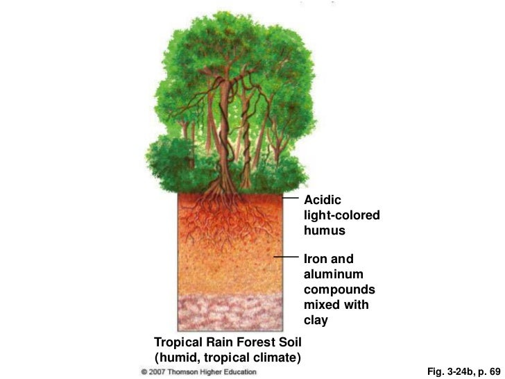 Soil and biomes and cycles ppt
