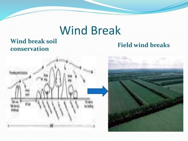 Wind Break Wind break soil conservation Field wind breaks