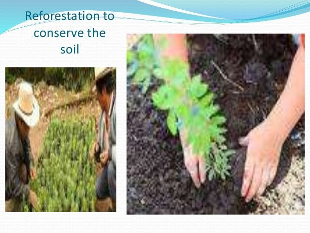 Reforestation to conserve the soil