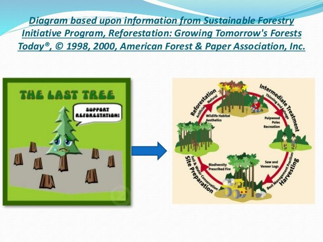 Diagram based upon information from Sustainable Forestry Initiative Program, Reforestation: Growing Tomorrow's Forests Tod...