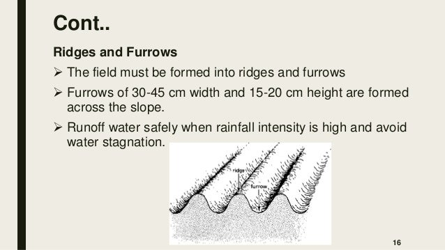 Cont.. Ridges and Furrows  The field must be formed into ridges and furrows  Furrows of 30-45 cm width and 15-20 cm heig...