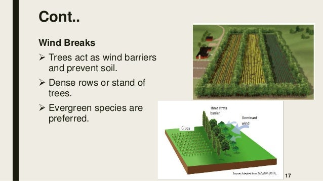 Cont.. Wind Breaks  Trees act as wind barriers and prevent soil.  Dense rows or stand of trees.  Evergreen species are ...