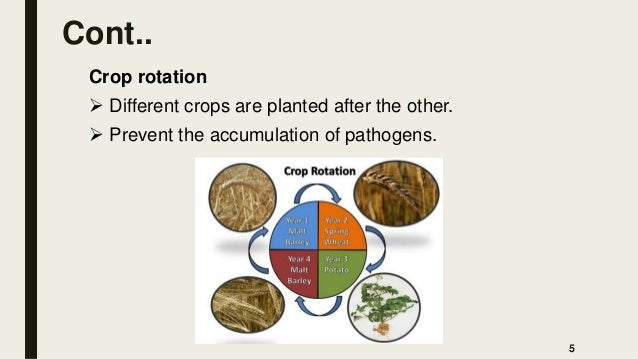 Cont.. Crop rotation  Different crops are planted after the other.  Prevent the accumulation of pathogens. 5