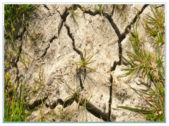Causes of soil erosion Wind and water are the main agents of soil erosion. The amount of soil they can carry away is influ...