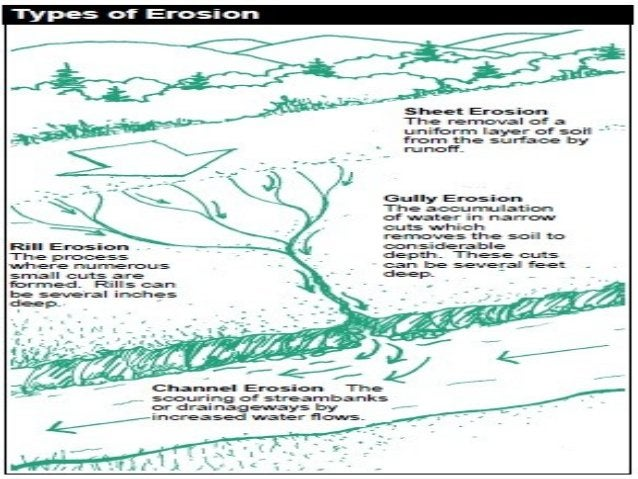 IMPORTANCE OF PLANTS IN CONTROLLING SOIL EROSION Plants provide protective cover on the land and prevent soil erosion for ...