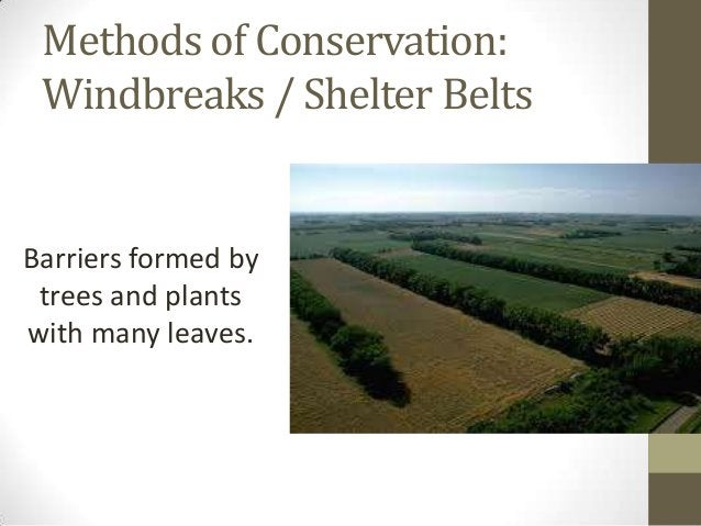 Methods of Conservation: Windbreaks / Shelter Belts Barriers formed by trees and plants with many leaves.
