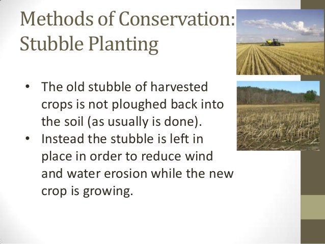 Methods of Conservation: Stubble Planting • The old stubble of harvested crops is not ploughed back into the soil (as usua...