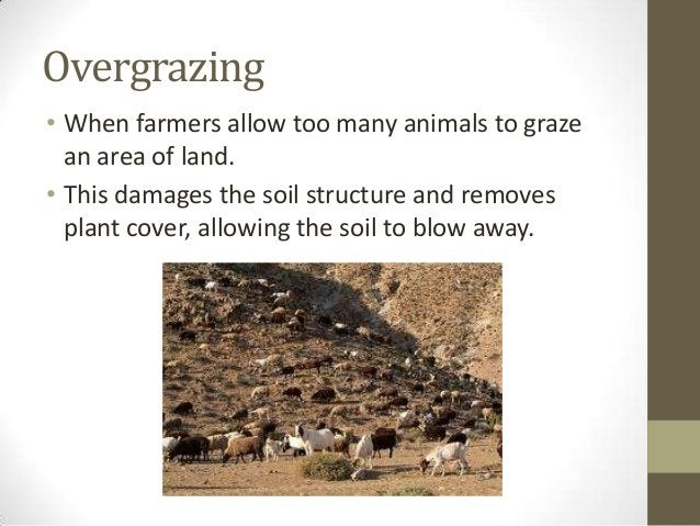 Overgrazing • When farmers allow too many animals to graze an area of land. • This damages the soil structure and removes ...