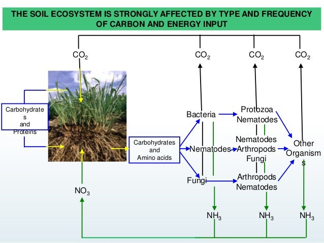 Soil food web and its utility for ecology for Utility of soil