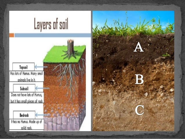 Soil formation for Soil formation