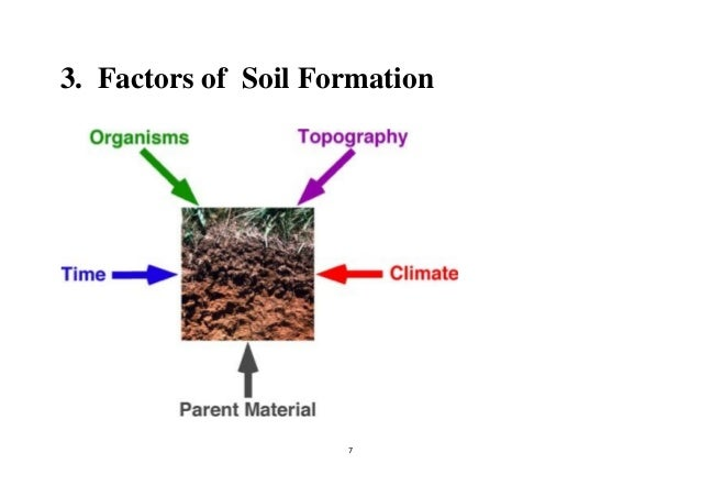 Soil forming processes for Explain the formation of soil