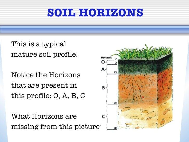 A mature soil profile