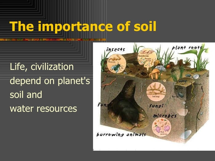 Soil importance for Three uses of soil
