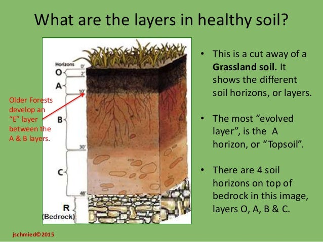 Soil lab guiding questions for What are the different layers of soil