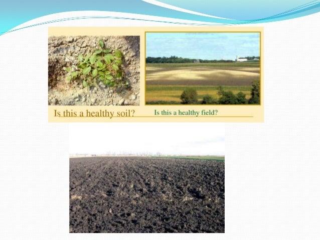 Soil organic matter pp for Soil organisms
