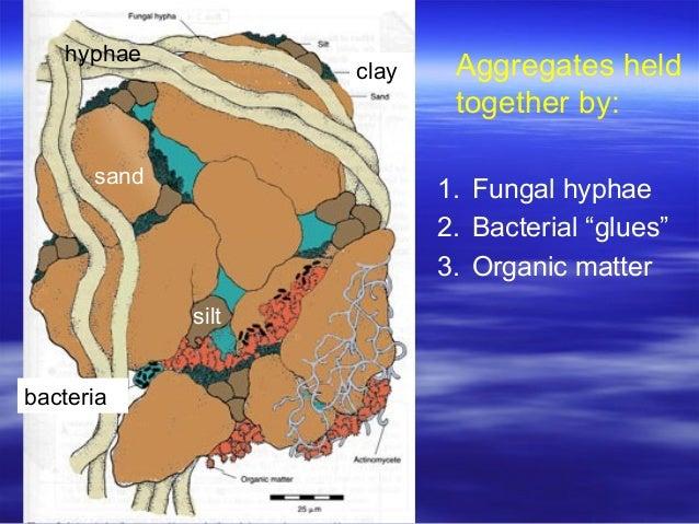 Soil organisms for Soil organisms