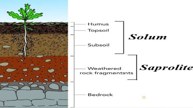 Soil profile for Soil 5 letters