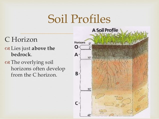 Soils for What is found in soil