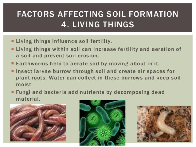 Soils part 2 for Things in soil