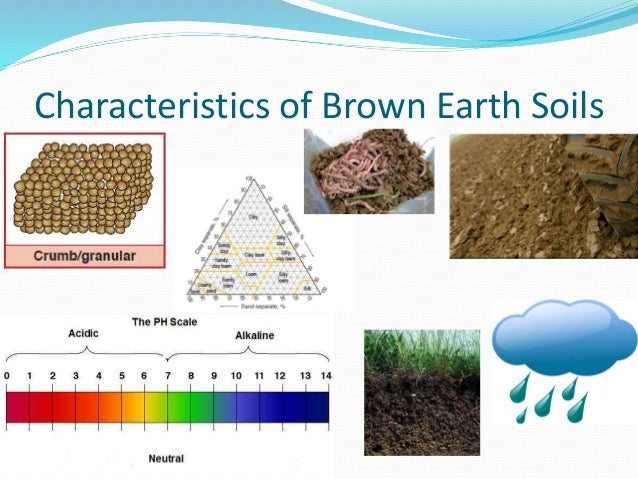 Essay on Soil: Classification, Profile, Composition and Soil Organism