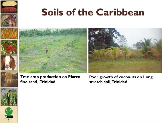 Status of soil resources in the caribbean and experiences for About soil resources