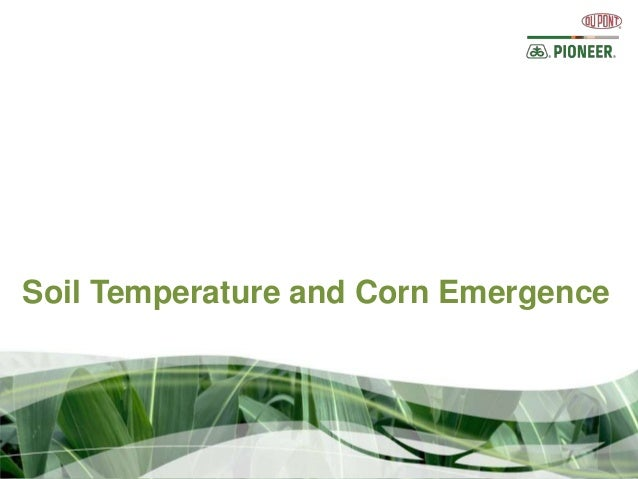 Soil Temperature and Corn Emergence