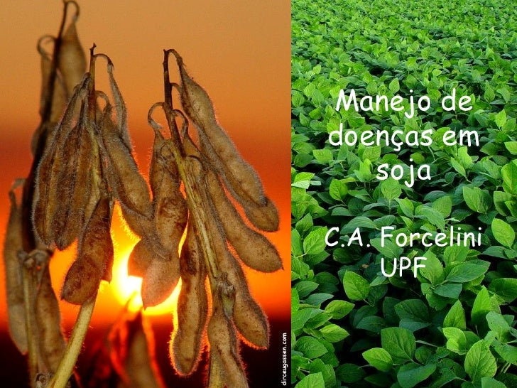 Manejo de doenças em    soja  C.A. Forcelini      UPF