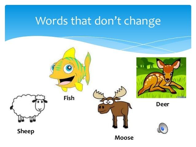 Mini Grammar Lesson- Irregular Nouns (Plural); Sokol