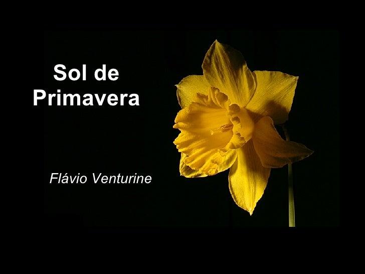 8ec7b937e Sol de Primavera Flávio Venturine ...