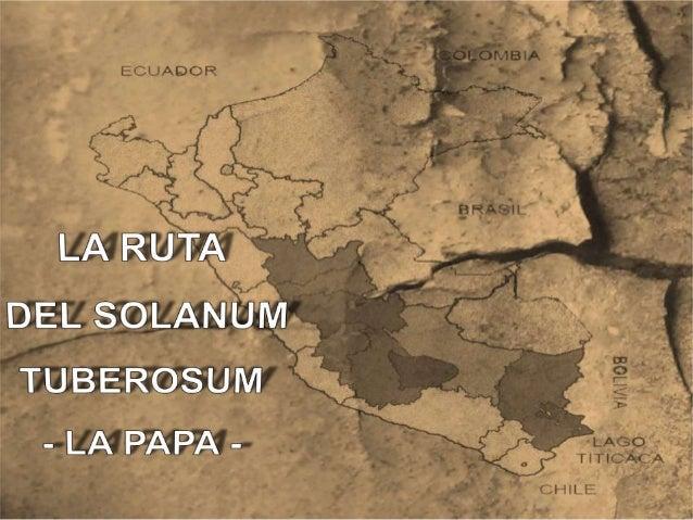 Transformación climáticaEl calentamiento progresivo de las Américas a partir delPaleoindio (12.000-8.000 a.C.) permitió el...