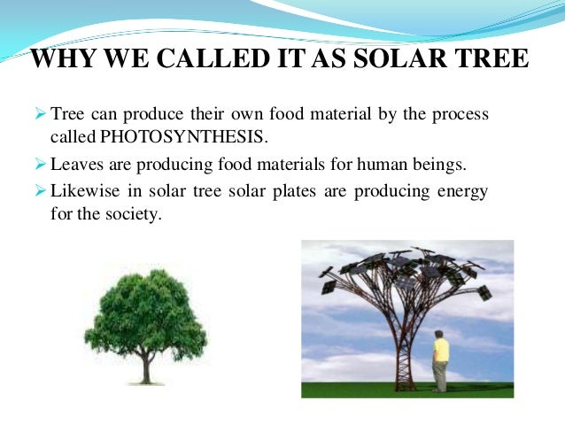 Solar tree ppt 6 tree sciox Image collections