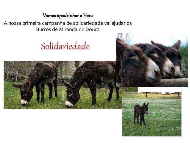 Solidariedade Vamos apadrinhar a Hera A nossa primeira campanha de solidariedade vai ajudar os Burros de Miranda do Douro