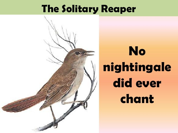 solitary reaper Ebscohost serves thousands of libraries with premium essays, articles and other content including a stylistic analysis of william wordsworth's the solitary reaper.