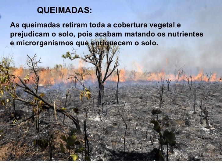 PECUÁRIA:Florestas inteiras têm sido devastadas para fazer pastos ecriar animais...Ao longo do tempo, os animais vão pasta...