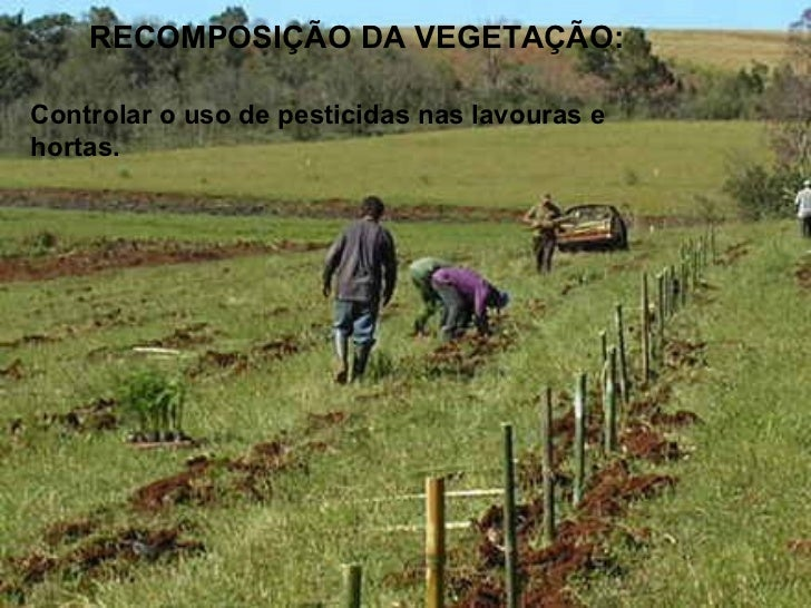 A calagem e a fitorremediaçãoSão técnicas usadas paramelhorar a qualidadedo solo.