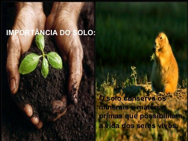 VEGETAÇÃO:A vegetação nativa é importante para amanutenção e conservação dascaracterística do solo, pois ela fornecenutrie...