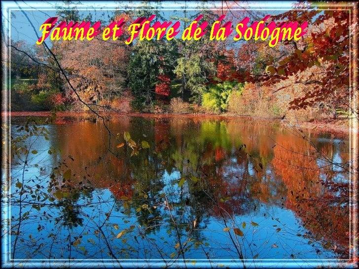 Faune et Flore de la Sologne