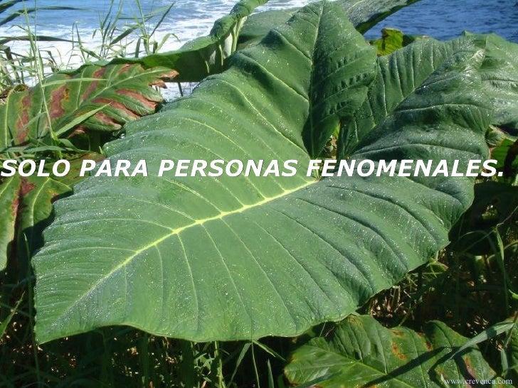 SOLO PARA PERSONAS FENOMENALES.  www.crevenca.com