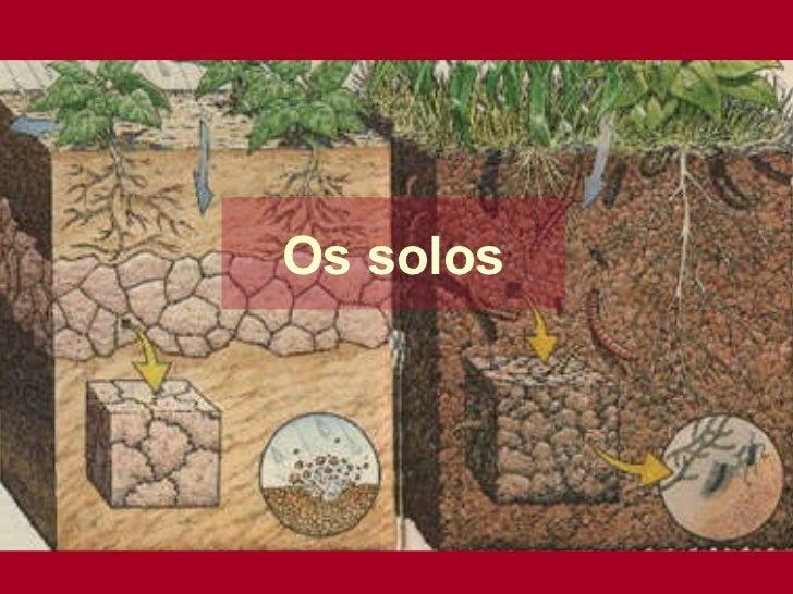 Os solos