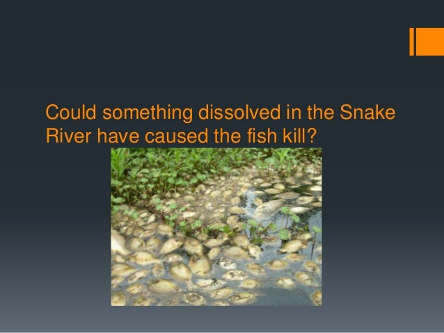 Could something dissolved in the SnakeRiver have caused the fish kill?