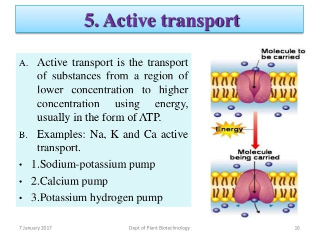 Solute Carrier Proteins